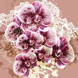 Grunge vector background with orchid flowers. Background with vector orchid flowers Stock Photo