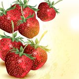 Grunge vector background with realistic strawberry Royalty Free Stock Photography
