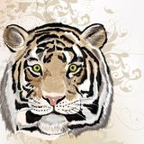 Grunge vector background  with tiger Royalty Free Stock Photo