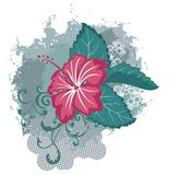 Grunge vector hawaiian hibiscus flower Royalty Free Stock Photos