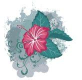 Grunge vector hawaiian hibiscus flower Royalty Free Stock Photos
