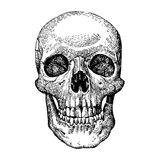 Grunge vector skulls. AI vector. Size and color can be changed Stock Images