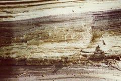 Grunge velho do fundo do sepia da textura da árvore tonificado Fotografia de Stock