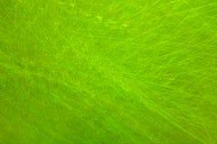 Grunge verde Fotos de Stock