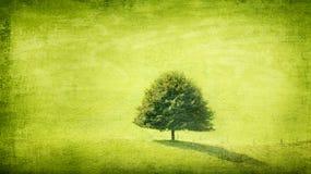 Grunge verde del solitario Imagenes de archivo