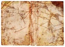 Grunge Vine Background Stock Photo