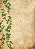 Grunge vine background Royalty Free Stock Image