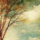 Grunge vintage nature background Stock Photo
