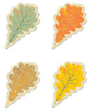 Grunge vintage oak leaves sticker Stock Photography