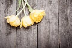 Grunge vintage spring background. Tulips on wooden background Stock Photos