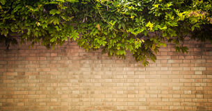Free Grunge Wall Stock Images - 26999964