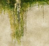 Grunge wall with dripping moss. Design element. Stock Photo
