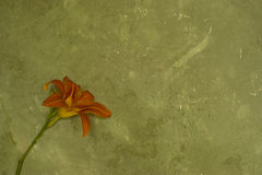 Grunge wall with flower Stock Images