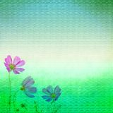 Grunge wall and flowers Royalty Free Stock Photo