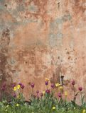 Grunge wall with tulips royalty free stock photography