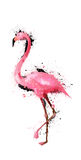 Grunge watercolor flamingo illustration Royalty Free Stock Images