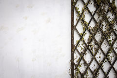 Grunge White Wall with Plants. Grunge White Wall with Plant on Wood stock image