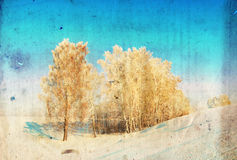 Grunge winter background with birch trees Stock Photo