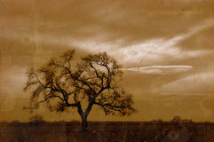Grunge Winter Oak Tree. Grunge Antique Photo Effedt of Winter Oak Tree, High Clouds, and Setting Sun Royalty Free Stock Images