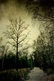 Grunge Winter Park Royalty Free Stock Photography