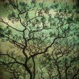 Grunge wizerunek ciemny las, perfect Halloween tło royalty ilustracja