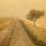 Grunge wizerunek drzewo nad grunge tłem Obrazy Royalty Free