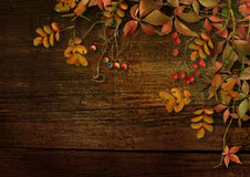 Grunge wood background with autumn leaves and rowan Royalty Free Stock Photos