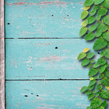 Grunge wood background on green color with ivy fixing tree plant Stock Photo