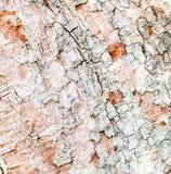 Grunge wood bark texture background Royalty Free Stock Photos