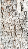 Grunge wood bark texture background Royalty Free Stock Photography