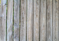 Grunge Wood panels for background Stock Image