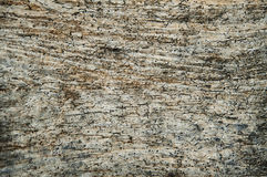 Grunge wood texture. Pattern of old weathered timbered wall. Royalty Free Stock Photo