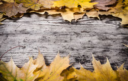 Grunge wooden background frame with yellow leaves Stock Images