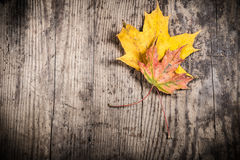 Grunge wooden background with two yellow leaves Royalty Free Stock Photos