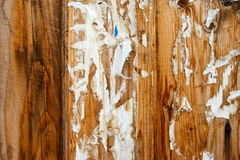Grunge wooden fence Royalty Free Stock Images