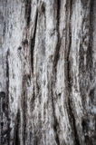 Grunge wooden texture Stock Photo
