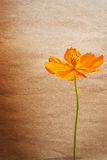 Grunge yellow flower Stock Images