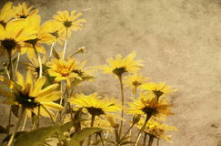 Grunge yellow flowers. Brown background Royalty Free Stock Photo