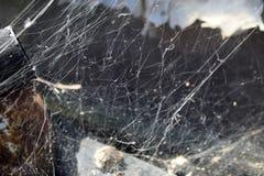 Grungebakgrund med en spindelnät Arkivfoton