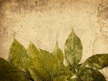 grungeleaves Arkivbilder