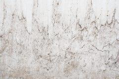 Grungeljus - grå textur av en gammal vägg med svartskilsmässor, vit yttersida med fläckar, abstrakt bakgrund Royaltyfria Foton
