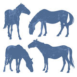 Grungesilhouetten van paarden Stock Afbeelding