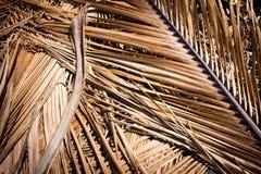 Grungetextuur van droog palmblad royalty-vrije stock foto's