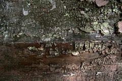 Grungeträgrov textur arkivbilder
