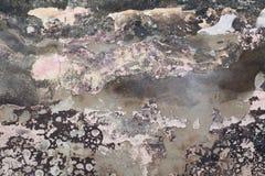 Grungeväggen texturerar royaltyfri bild
