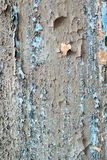 Grungeväggen texturerar Royaltyfria Bilder