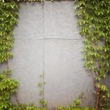 grungy стена улицы Стоковые Фото