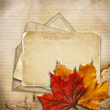 Grungy autumn background with cards and maple leaves Stock Photography