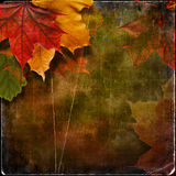 Grungy autumn background with maple leaves Royalty Free Stock Images