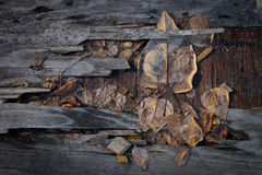 Grungy autumn leaves on old plywood Royalty Free Stock Photo